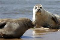The Seals & Sheringham