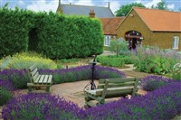 Norfolk Lavender Tour & Tea